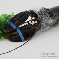 加拿大波士顿大龙虾供应进口冷冻海鲜
